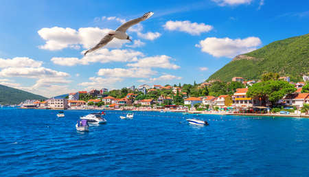 Seagull flying by the Coast of the Adriatic sea and Yachts, Kotor area, Montenegro. Stockfoto