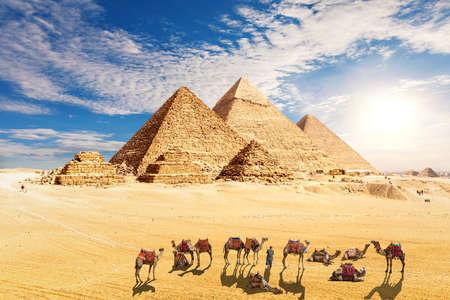 amel caravan resting near the Pyramids of Egypt in the desert, Giza