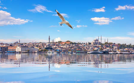 Seagull flies by the Suleymaniye Mosque in the Bosphorus Straight, Istanbul.