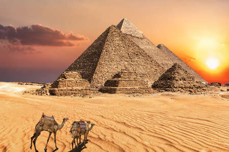 Camel caravan near the Giza Pyramids of Egypt. 免版税图像