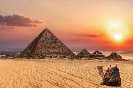 The Pyramid of Menkaure at sunset and a camel nearby, Giza, Egypt. 免版税图像