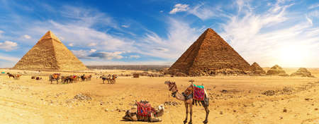 Camels by the Egypt Pyramids and the camp of bedouins, Giza 免版税图像