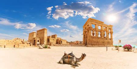 Philae Temple, Trajans Kiosk and a camel, beautiful panorama, Aswan, Egypt