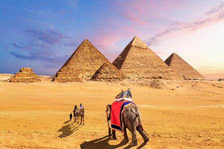 Elephants and camels in the desert near the Pyramids of Giza, Egypt