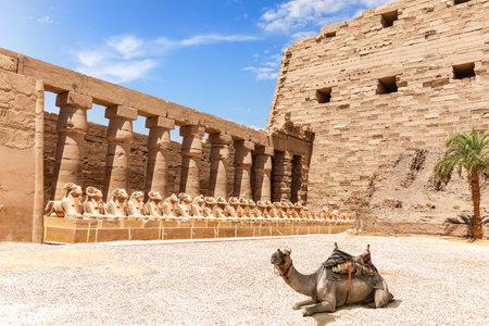 A camel near the Avenue of Rams, the Temple of Amun at Karnak, Luxor, Egypt 版權商用圖片