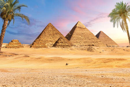 Famous Great Pyramids of Egypt behind the palms, Giza, Cairo district 版權商用圖片