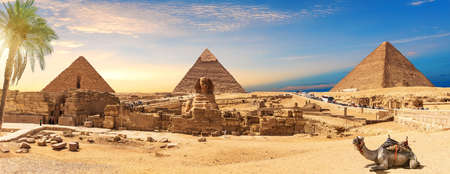 Egypt Pyramids and Sphinx panorama behind the palm with a camel lying by, Cairo, Giza. 版權商用圖片