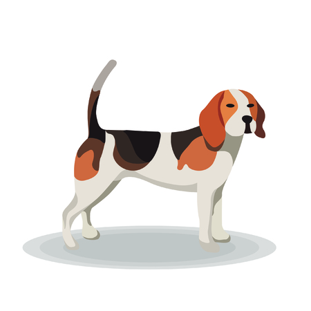 black haired: Illustration - Beagle on White Background