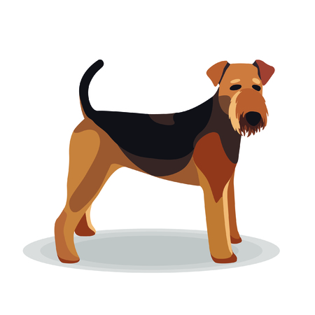 airedale terrier: Illustration - Airedale Terrier on White Background Illustration