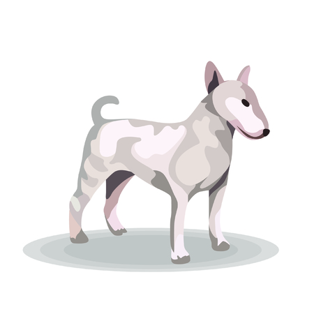 Illustration - Bull Terrier on White Background Ilustrace