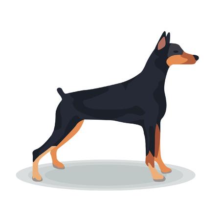 doberman: Illustration - Dobermann auf wei�em Hintergrund
