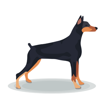 Illustration - Doberman Pinscher on White Background