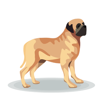 Illustration - St  Bernard on White Background