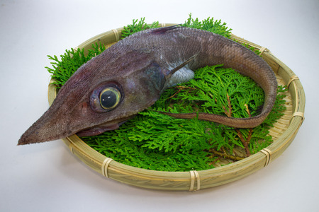 actinopterygii: Deep-sea fish Hardhead grenadier Stock Photo