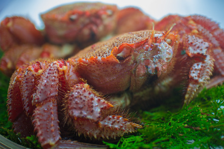 hairy back: Crab Blowing bubbles Stock Photo