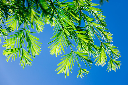 exhilarating: Fresh green leaves shine in the sun