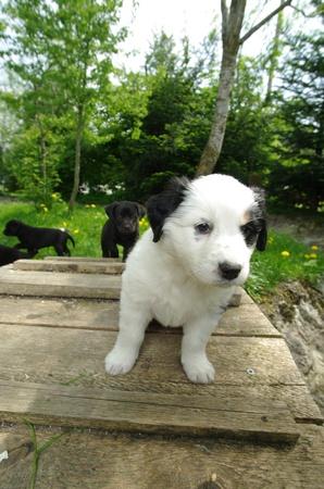 curios: cute puppies in the meadow looking curios