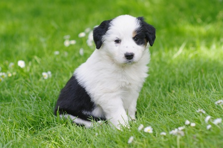 dogs play: cute puppies in the meadow in spring time Stock Photo