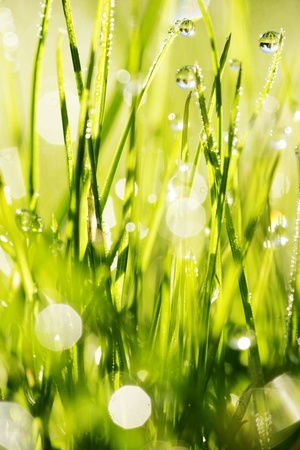 close-up of grass with dewdros, very shallow focus............ Stock Photo - 8952517