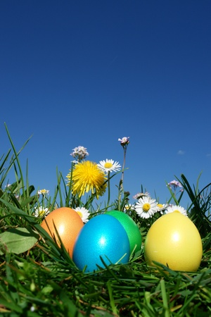 easter nest: colorful Easter egg in the fresh  spring meadow