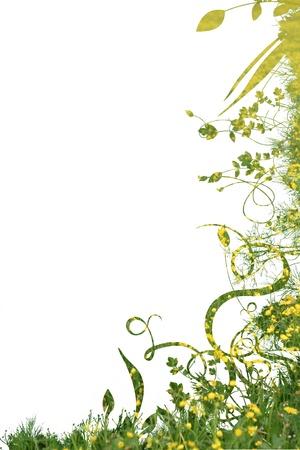 花葉白に対して美しい芸術家気取りの背景
