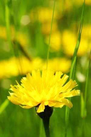 Spring flowers in the field on a sunny day Stock Photo - 8952439