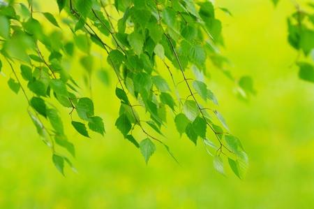 Grünblätter Laub im Frühjahr außerhalb in der Natur