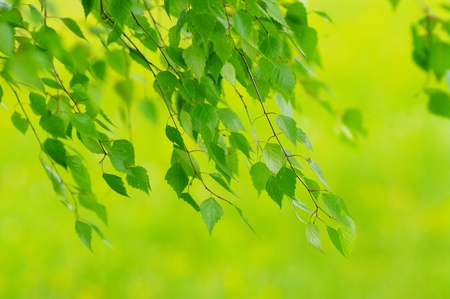 green leaves foliage at springtime outside in the nature photo