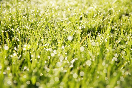 close-up of grass with dewdros, very shallow focus............ Stock Photo - 8952635