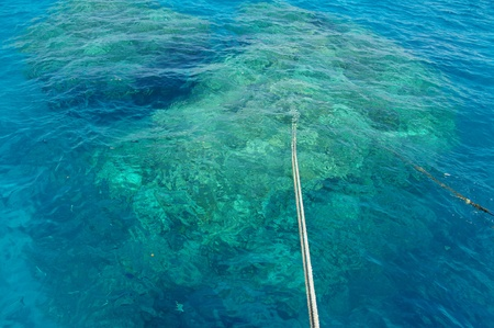 anchro rope at a coral reef in the red sea..... photo