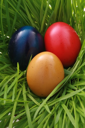 a easter nest with egg in the grass........... photo