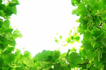 Fresh green leaves forming a natural frame border........... Stock Photo - 8952572