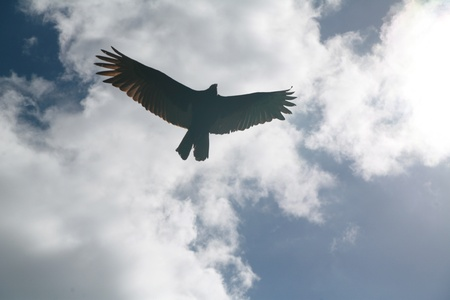 Picture of a flying eagle infront of wonderfull clouds photo