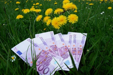 big bank notes euros in the meadow photo