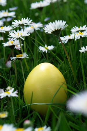 colorful Easter egg in the fresh  spring meadow photo