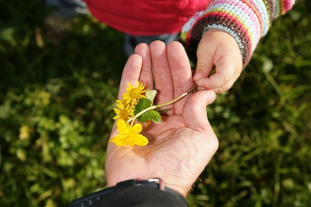 A child give its a parent a spring flower. Stock Photo - 9078210