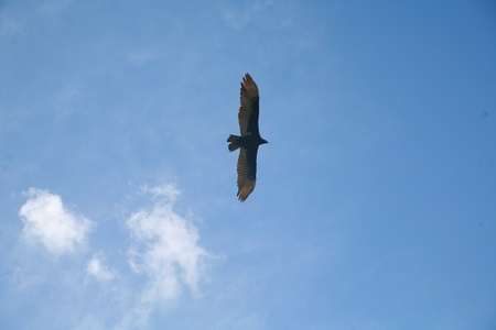 wonderfull: Picture of a flying eagle infront of wonderfull clouds