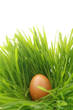 egg hunt: a easter nest with egg in the grass........... Stock Photo