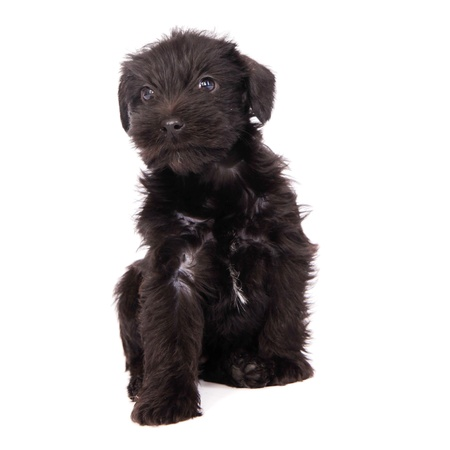 cuteness: little puppies isolated on a white background