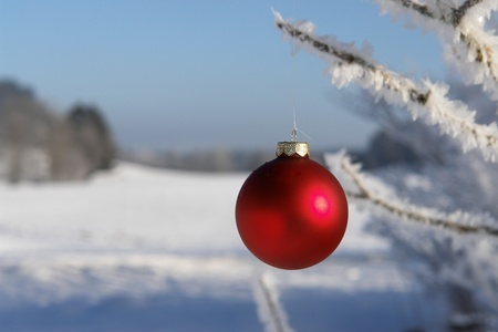 a red bauble in snowy winter landscape photo