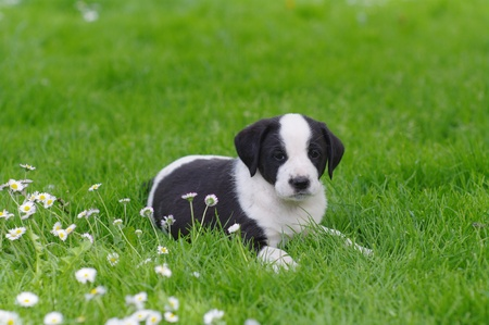 doggie: cute puppies in the meadow in spring time Stock Photo
