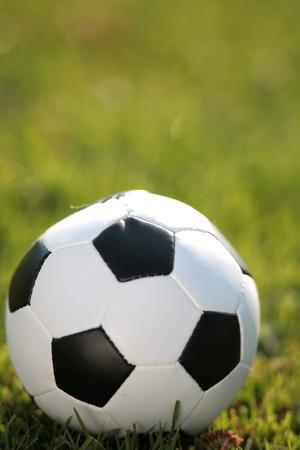 soccer wm: football in the grass
