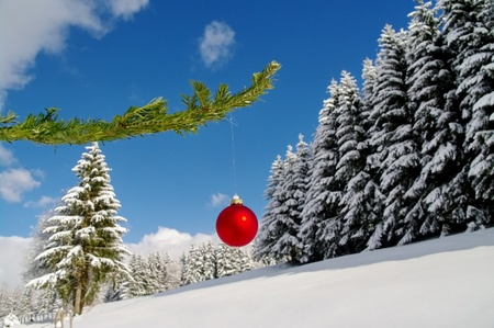 a red bauble in a winter landscape photo