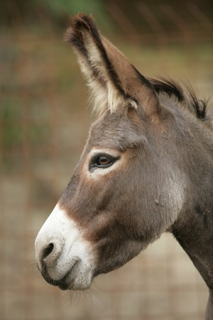 a close encounter with an donkey