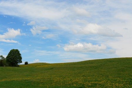 a beautiful summer landscape outside in the meadow photo