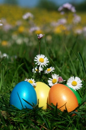 easter egg hunt: colorful Easter egg in the fresh  spring meadow