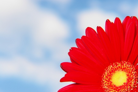 Gerbera against the sky on a sunny day photo
