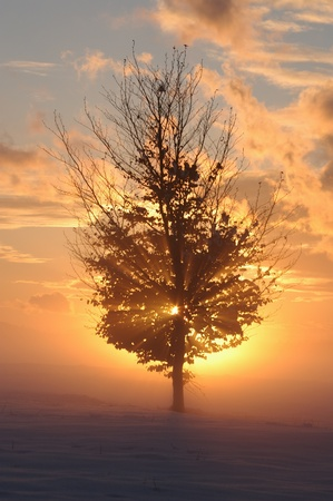 a romantic misty winter sunset with tree photo