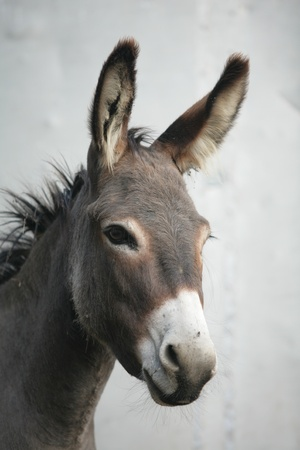 donkey: een close encounter met een ezel ezel Stockfoto