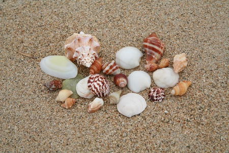 beautiful shells on very nice beach, focus in on the shells (shallow DOF). Stock Photo - 17551299